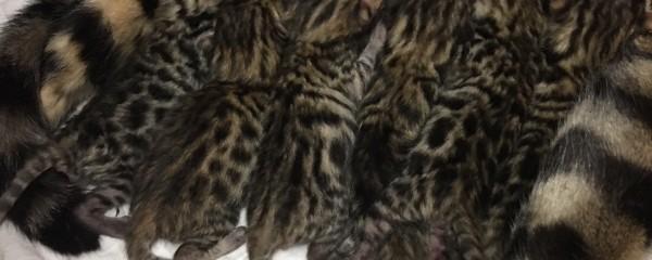 Catwalk Mary Quants Bubs Arrive 9th April